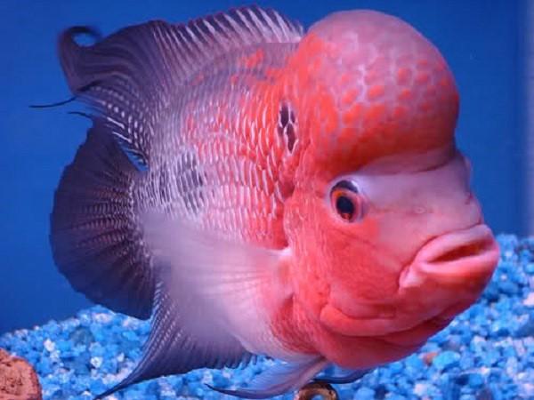 Mơ thấy cá - Ý nghĩa và con số lô đề của giấc mơ thấy cá