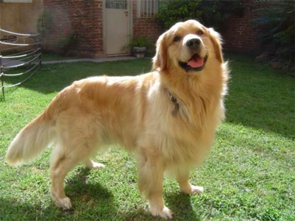 Mơ thấy chó - Giải mã con số lô đề của giấc mơ thấy chó