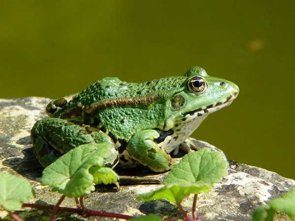 Mơ thấy ếch đánh con số nào chắc ăn nhất, dự báo điềm gì?