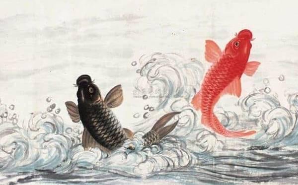 Nằm mơ thấy cá chép nên chọn cặp số may mắn nào dễ trúng nhất